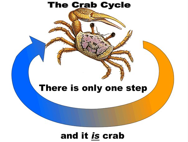 0_1490590667418_The Crab Cycle.jpg