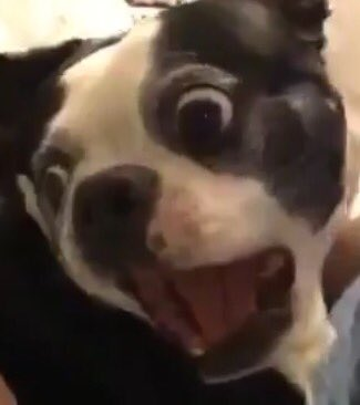 0_1489367021403_Dog Reaction Face.jpg